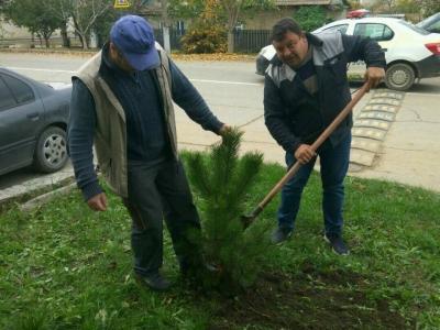 Национальная кампания «Дерево нашего долголетия» 2019г._1_8